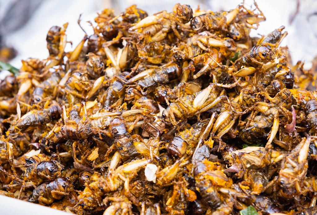 Comer insectos podría beneficiar tu salud más de lo que crees - comer-insectos-salud-estudio