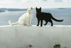 Es posible vivir en una isla griega con ¡55 gatos!