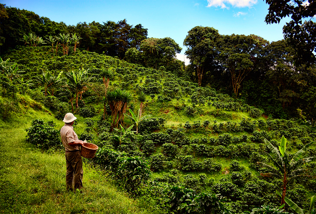 ¿Buscas un nuevo destino para vacacionar? ¡Te damos 5 razones para ir a Liberia, Costa Rica! - liberia3