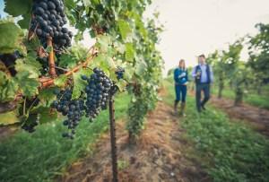 Bodegas de vino y cervecerías artesanales que debes visitar en la región de Niágara