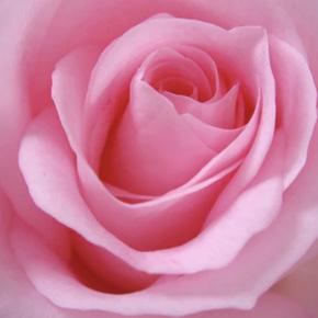 QUIZ: Qué perfume regalarle a tu mamá de acuerdo a su personalidad - rosa