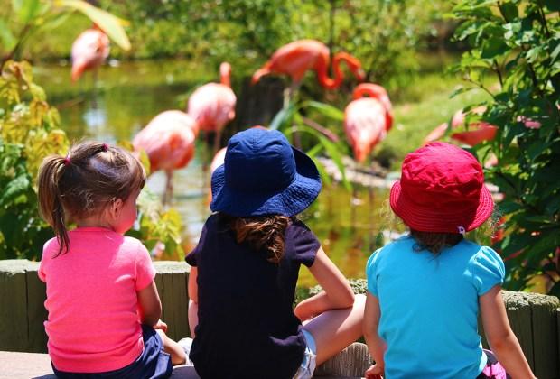 Las actividades más divertidas para niños en Toronto - toronto-zoo-1024x694