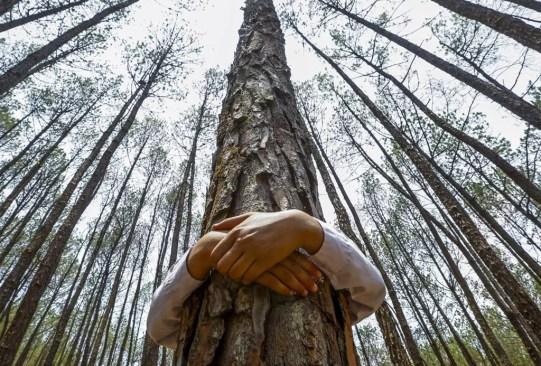 ¡Es un hecho! Abrazar árboles es bueno para tu salud - abrazar-arboles-2-300x203