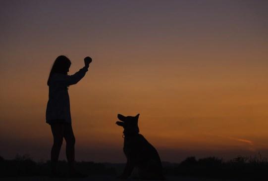 """""""Dogs"""" es la nueva serie documental de Netflix que te hará llorar de la emoción - dogs-amigos-caninos-serie-documental-netflix-1-300x203"""