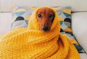 Cuida de tu perrito en el invierno con estos consejos