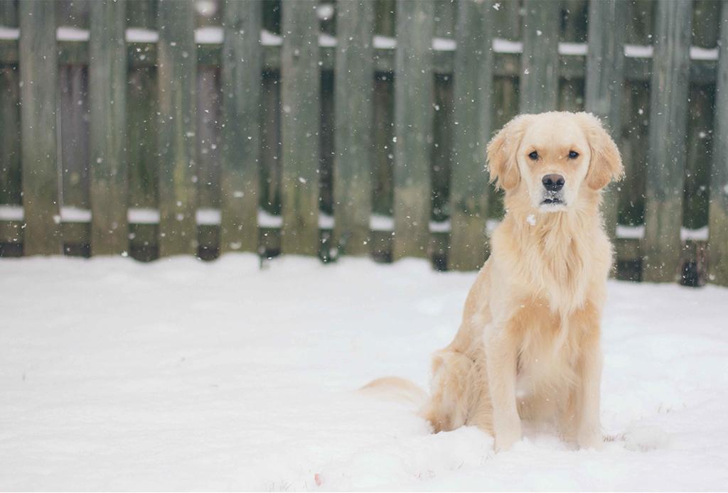 Cuida de tu perrito en el invierno con estos consejos - perritos-frio-3