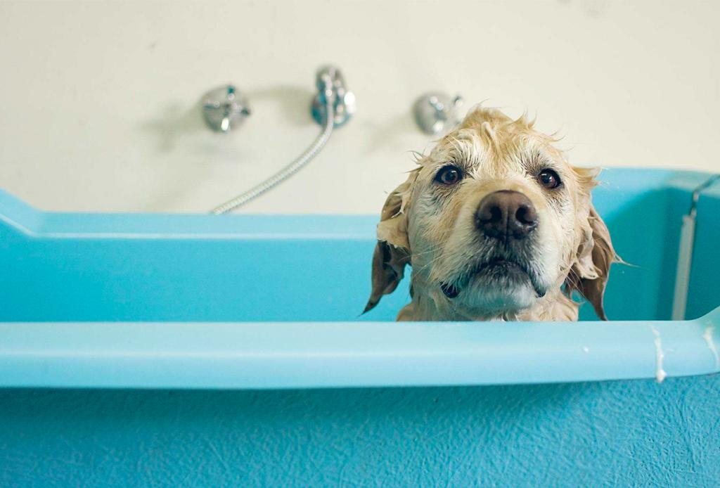 Cuida de tu perrito en el invierno con estos consejos - perritos-frio-5