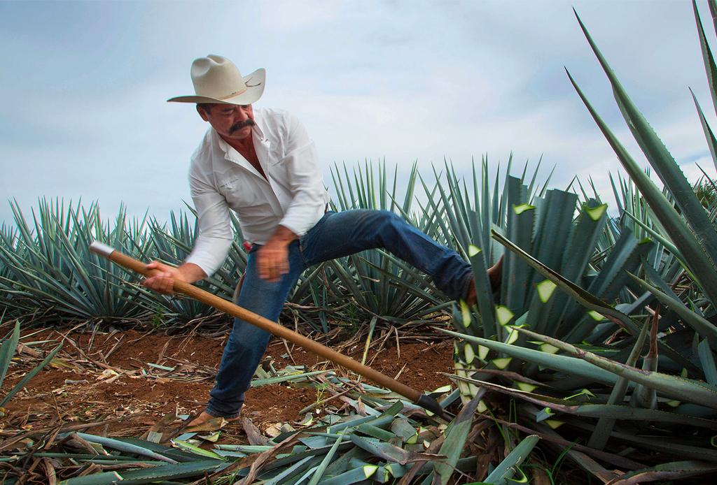 """No te pierdas """"Destilando México"""" Temporada 2, con la historia de nuestros típicos destilados - tequila-altos-3-1024x694"""