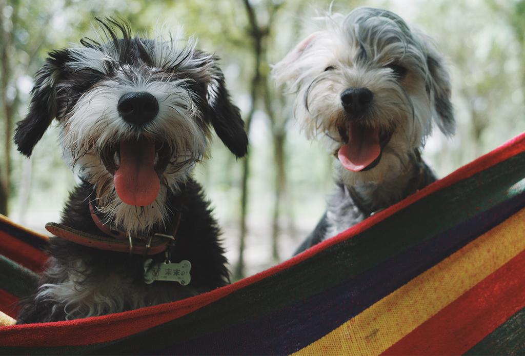 Camps para perritos cerca de la CDMX
