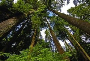 Lugares que tienes que conocer para disfrutar de la naturaleza alrededor de Vancouver