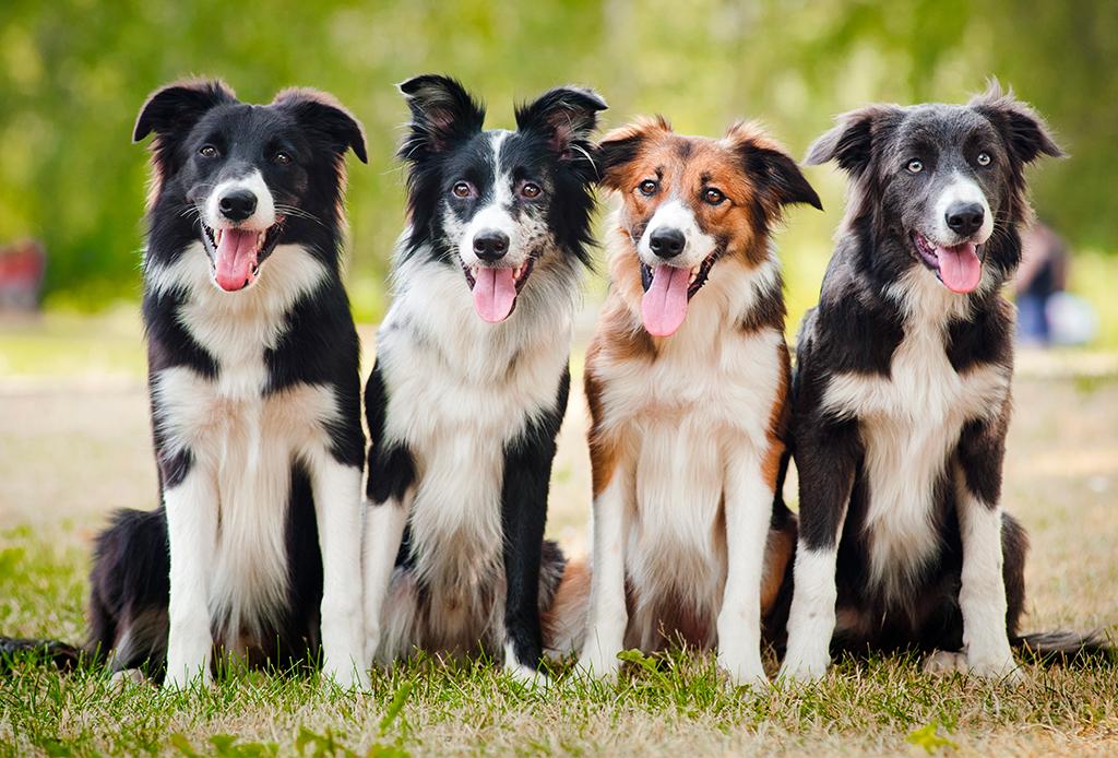8 reglas que debes seguir para criar a un perro sano y saludable