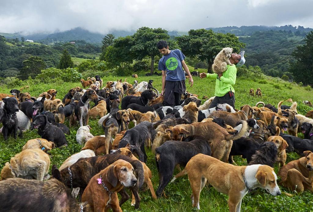 ¿No puedes adoptar un perrito? Territorio de Zaguates es un espacio para ayudarlos