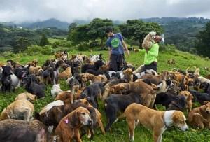 ¿No puedes adoptar un perrito? Territorio de Zaguates es la solución