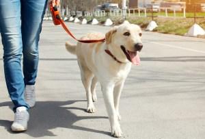 7 pasos para educar a tu perro a que camine/corra a tu lado