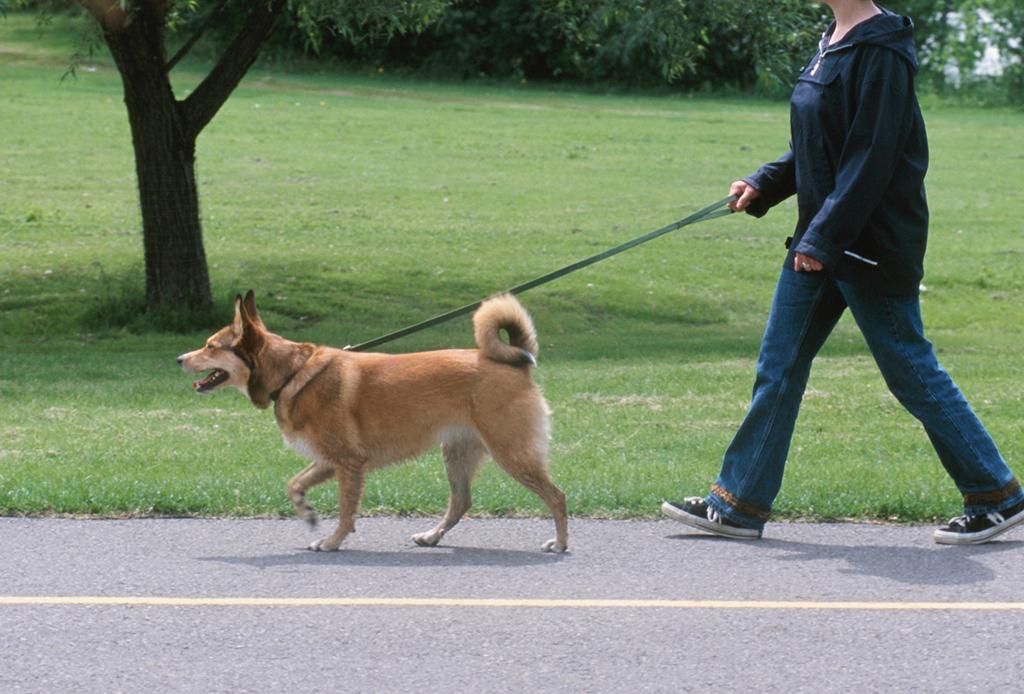 7 pasos para educar a tu perro a que camine/corra a tu lado - caminar-con-perro-3