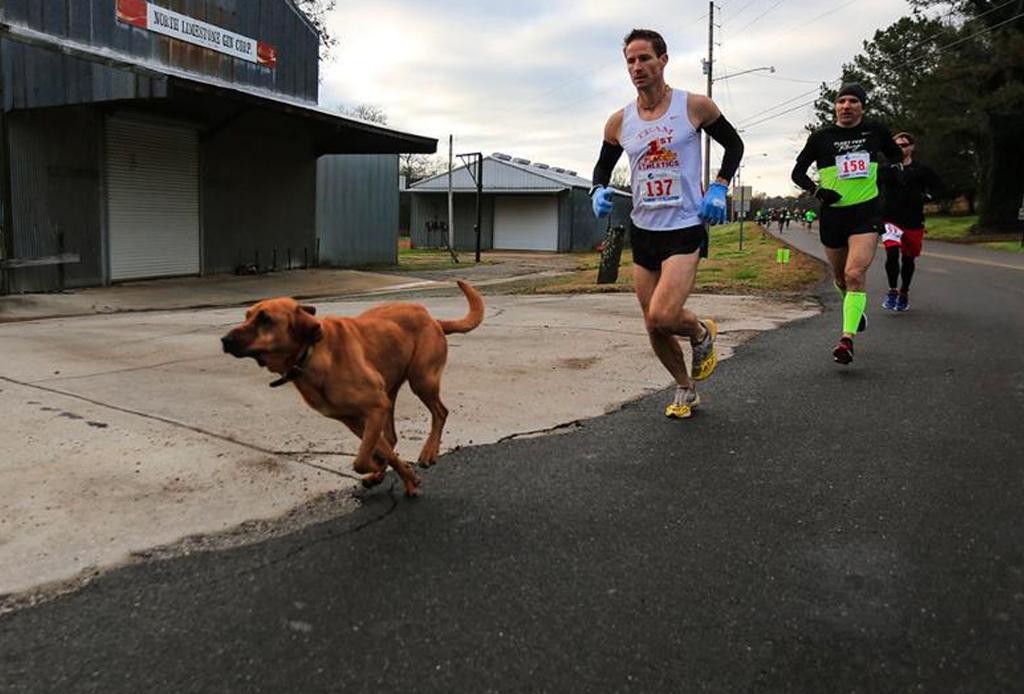 Este perro corrió accidentalmente medio maratón (y terminó en 7o lugar) - perrito-21k-2