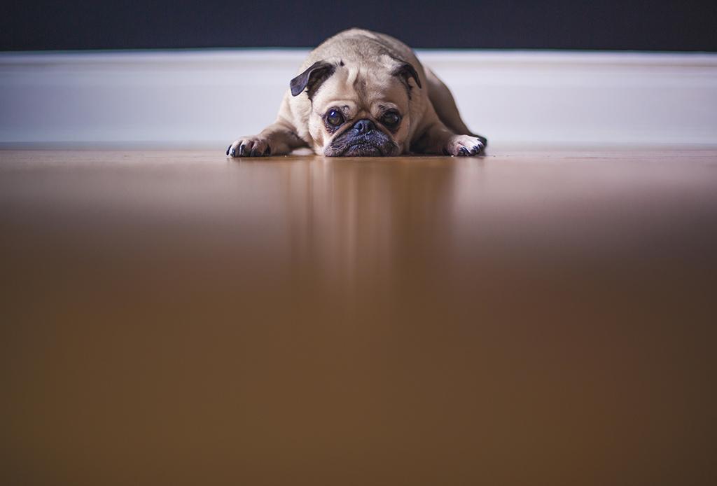 Así es como debes comenzar a entrenar a tu cachorro - depresion-cachorros-3