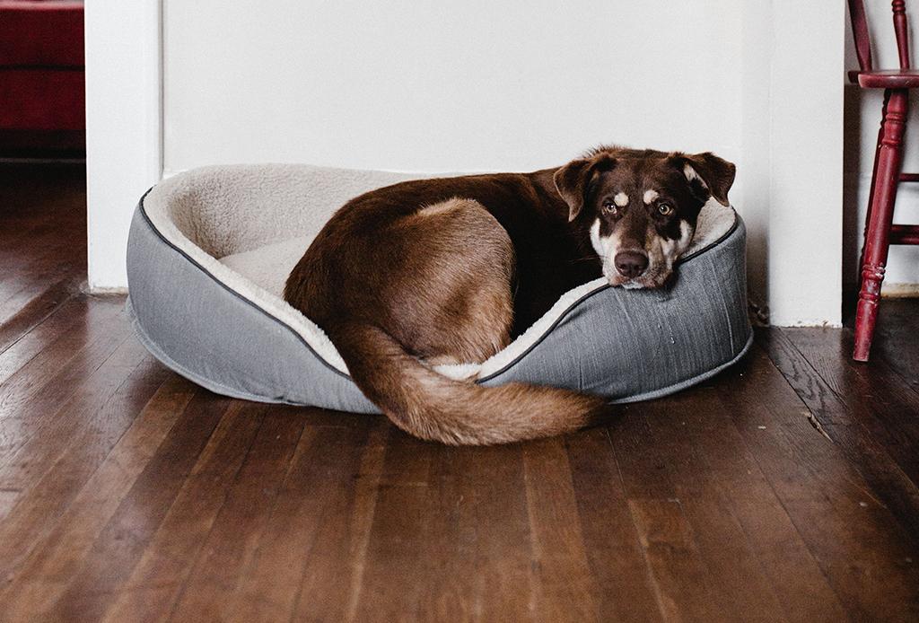 5 síntomas a los que debes poner atención para saber si tu perro está deprimido - depresion-cachorros-6