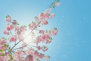 ¡Empieza la primavera! disfruta la llegada de abril con esta playlist