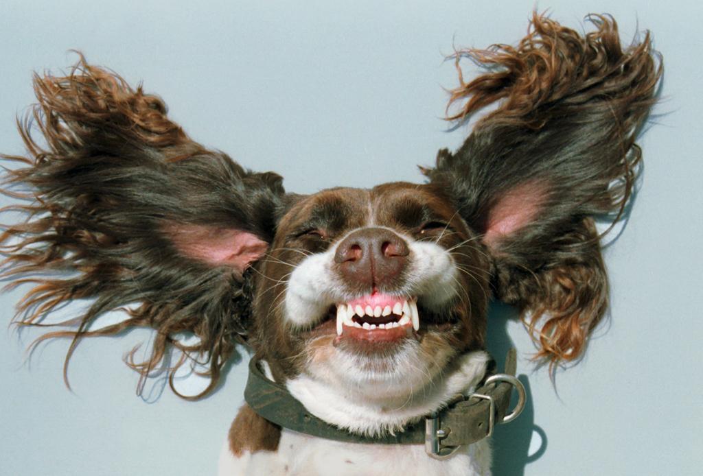 Conoce mejor a tu perrito, aprende su su lenguaje corporal con estos consejos - corporal-perros-3