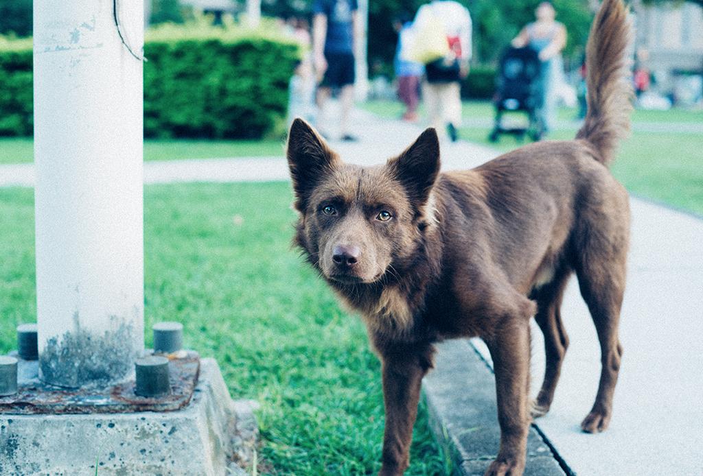 Conoce mejor a tu perrito, aprende su su lenguaje corporal con estos consejos - corporal-perros-6