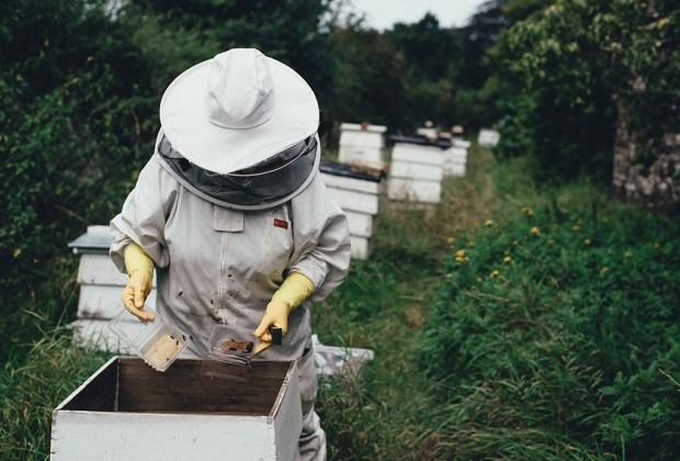 Así es como puedes ayudar a las abejas, este insecto vital en el planeta tierra - abejas-2