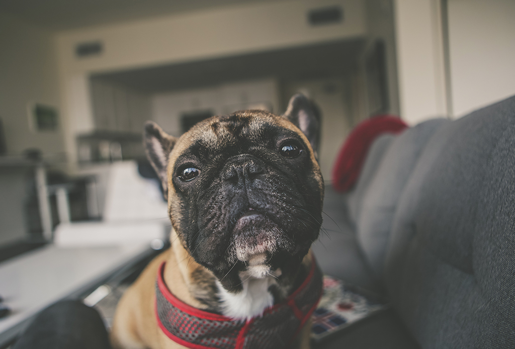 Los mejores ejercicios mentales para tu perro - perritos-mentales-3-1024x694