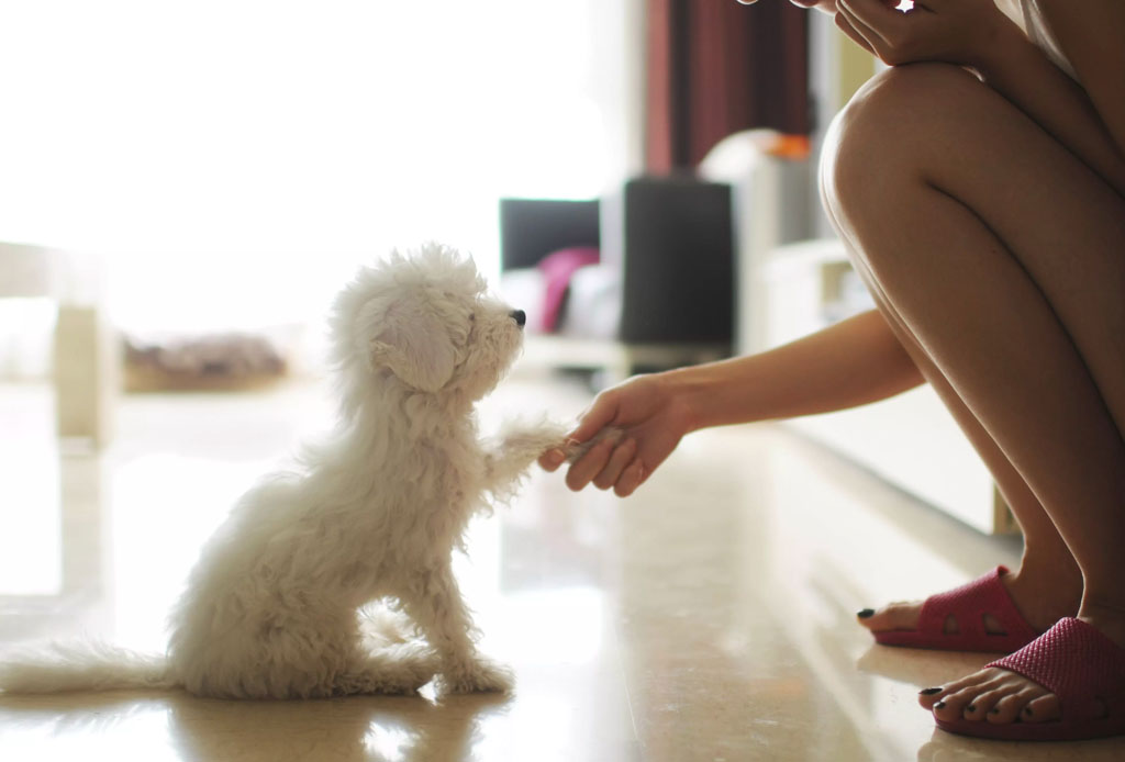 7 beneficios de adoptar un perro - trucos-perro-2-1024x694