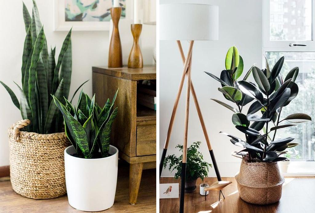 Cestos de palma muy cool para tus plantas