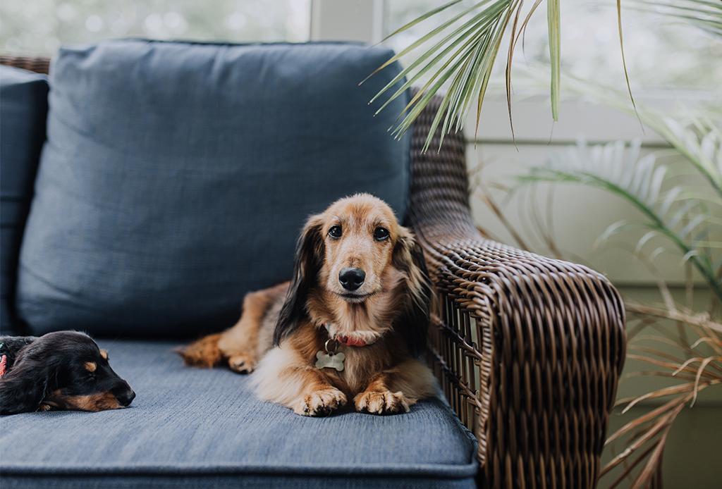 Convierte tu departamento en el lugar ideal para tu perro - perros-lluvia-1-1024x694