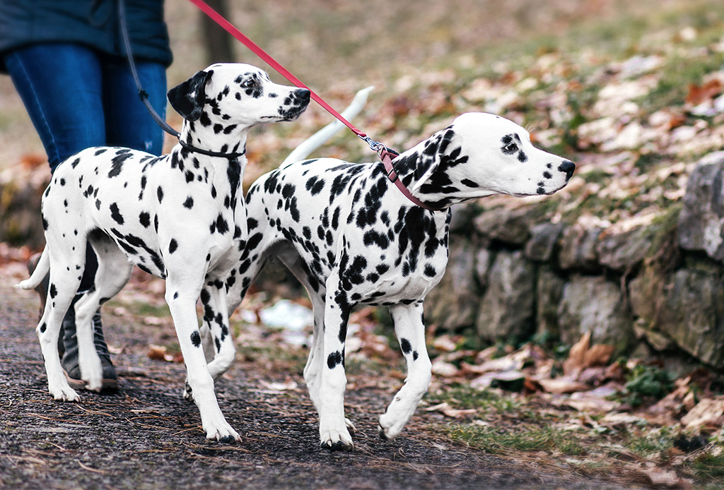 Que la lluvia no te impida pasear a tu perrito - perros-lluvia-3-1024x694