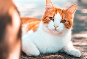 Esto es lo que debes hacer para prevenir un golpe de calor en tu gatito