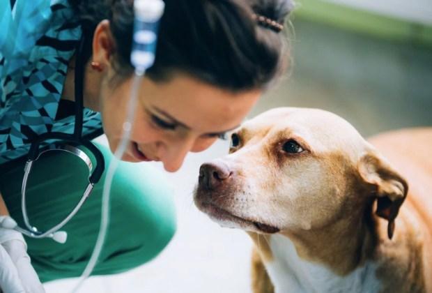 ¿Sabías que tu mascota también puede donar sangre? - perros-donacion-sangre-1