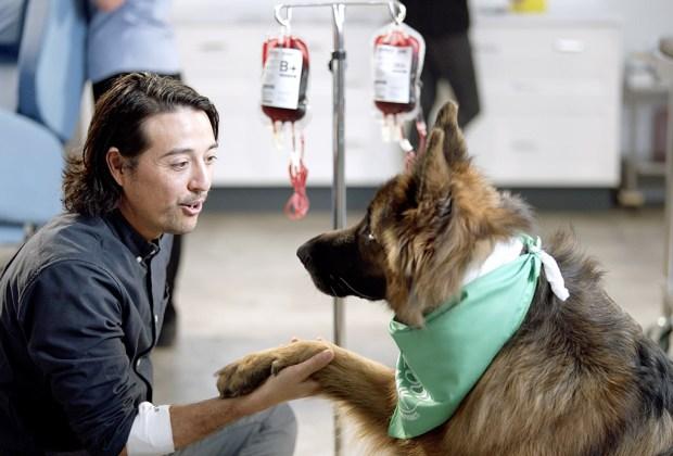 ¿Sabías que tu mascota también puede donar sangre? - perros-donar-sangre