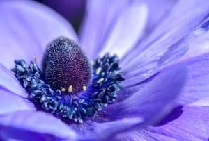 Los botánicos con mayores beneficios que debes buscar en tus productos de skincare