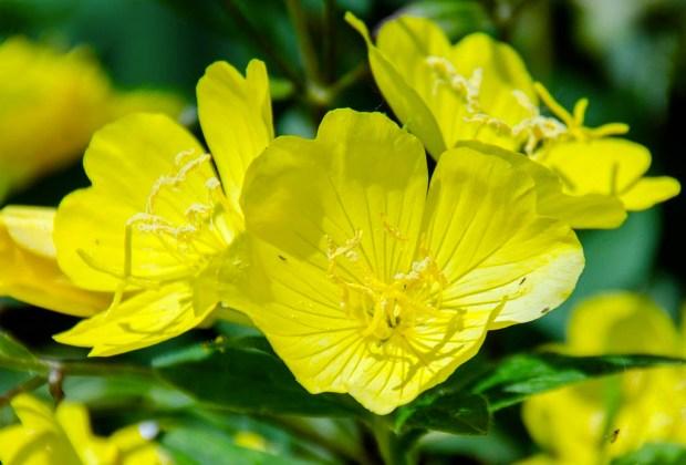 Los botánicos con mayores beneficios que debes buscar en tus productos de skincare - onagra