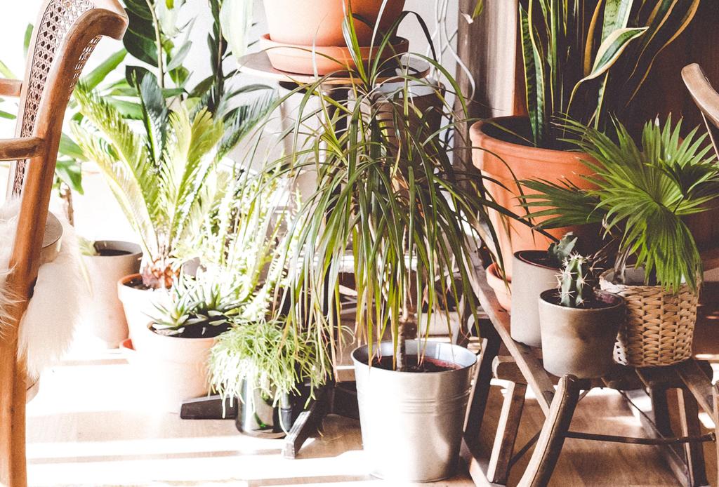 Mejores tiendas  de plantas y macetas en la CDMX
