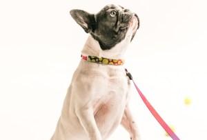 14º Festival de Mascotas - bazar-mascotas