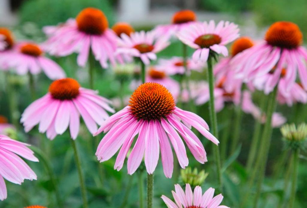 Suplementos herbales que te ayudarán a cuidar y mejorar tu salud - herbales-3-1024x694