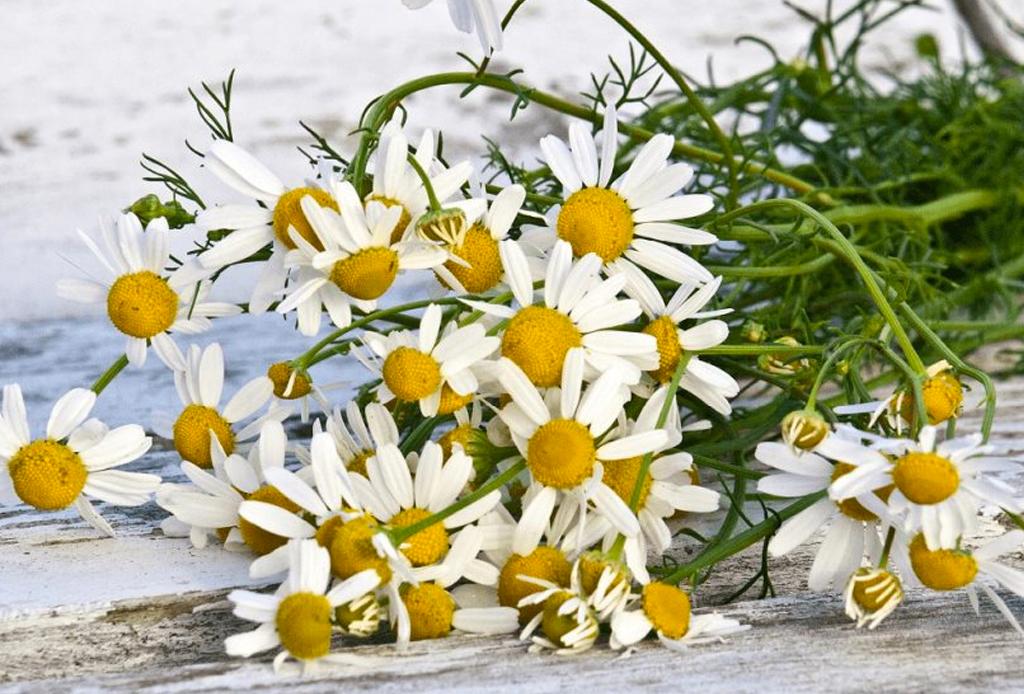 Suplementos herbales que te ayudarán a cuidar y mejorar tu salud - herbales-4-1024x694