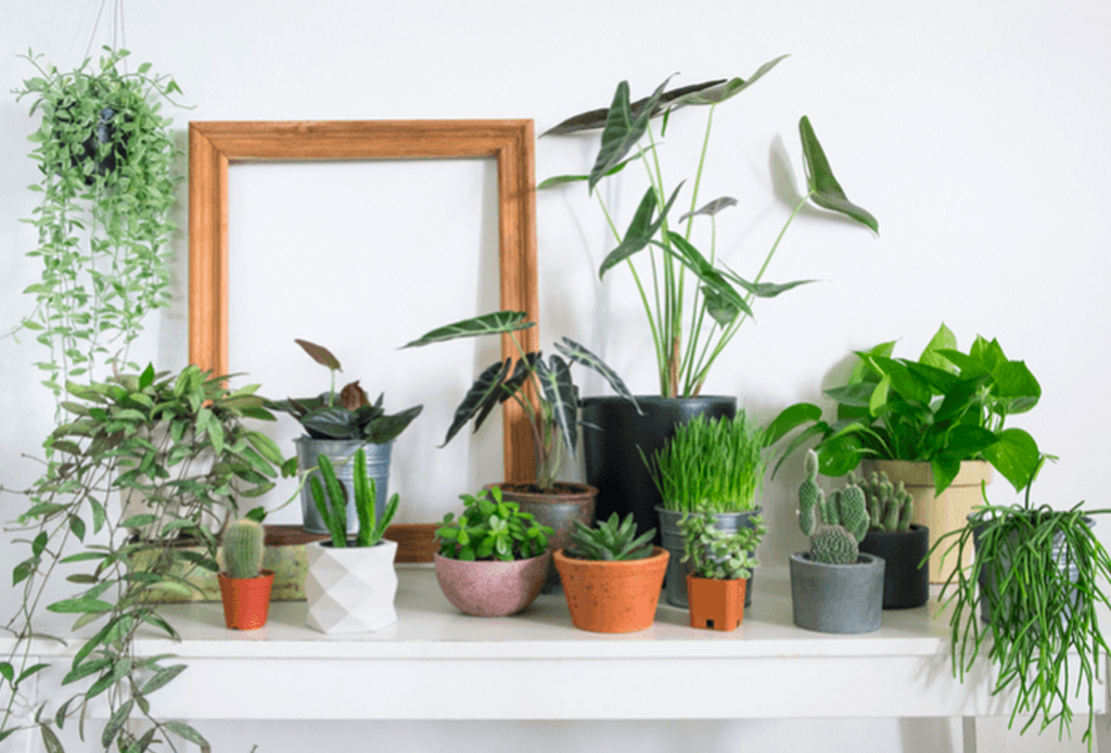 5 formas naturales de purificar el aire en casa - purificar-aire-1-1024x694