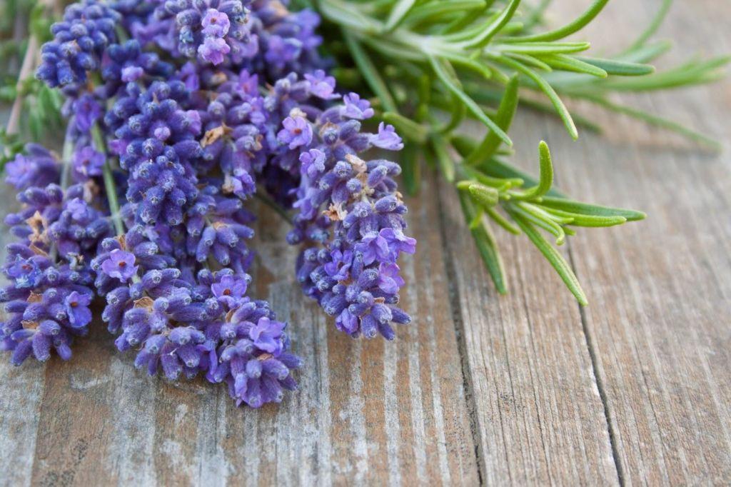 ¡Relájate! Estos aromas es lo que necesitas en tu casa - lavanda-1-1024x682