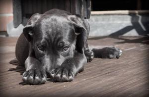 Cómo ayudar a tu perrito si tiene miedo a otras mascotas