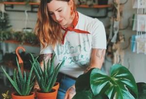 Cosas «extrañas» que puedes hacer para cuidar mejor tus plantas