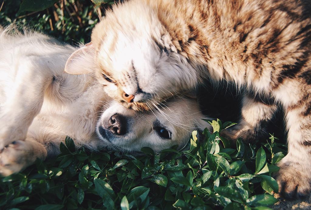 Los beneficios para la salud de tener una mascota - salud-mascotas-3-1024x694
