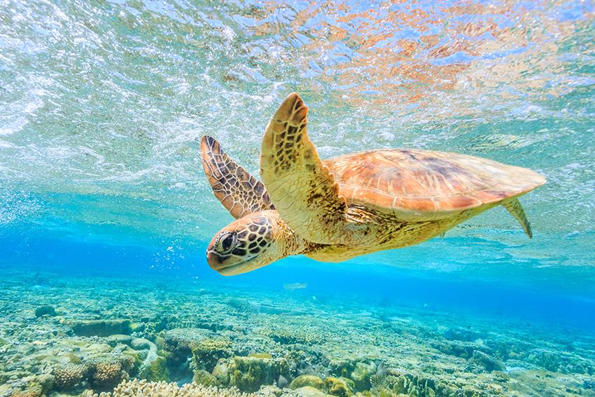 Lugares en México en los que puedes liberar tortugas - tortugas-xcael