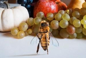 Tienes que conocer a la primer abeja «influencer»