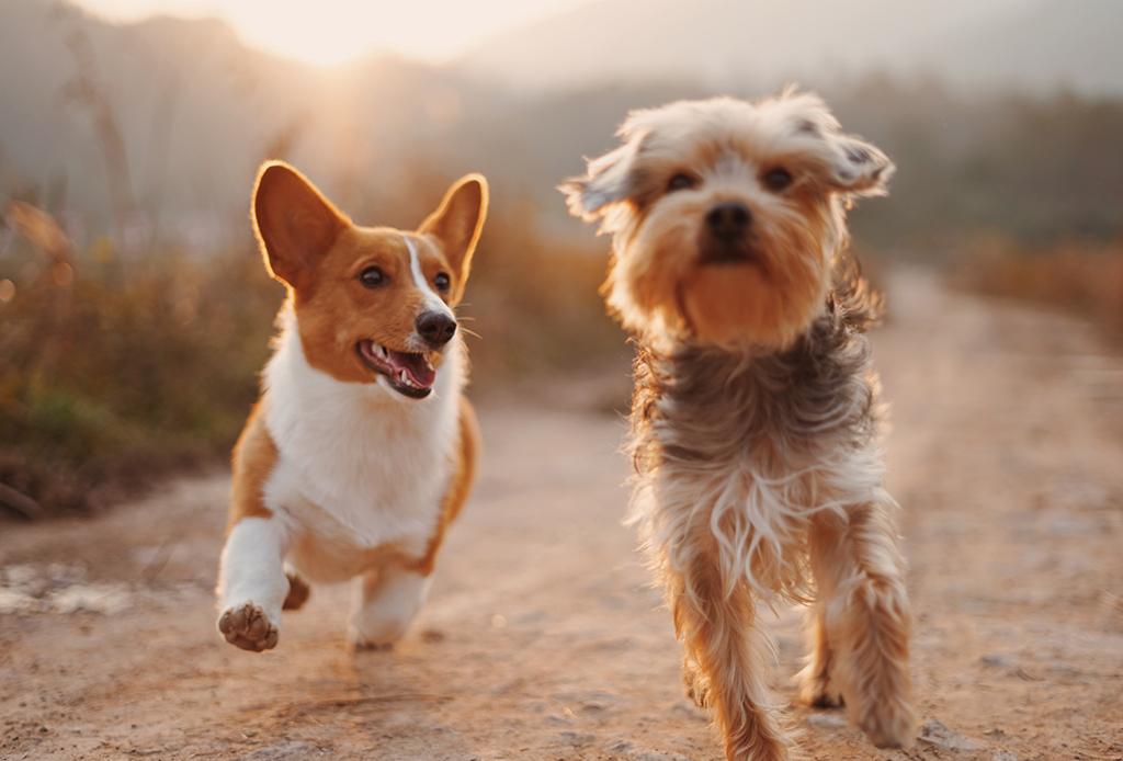 Así es como los perros saben si eres confiable o no, ¡te vas a sorprender! - colageno-perros-2