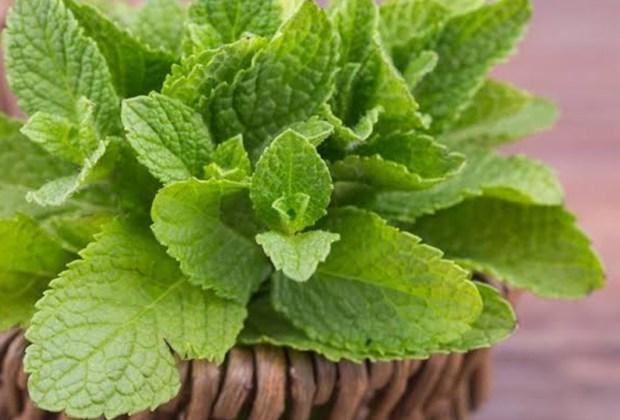 Remedios naturales que puedes tener en tu jardín - hierbabuena