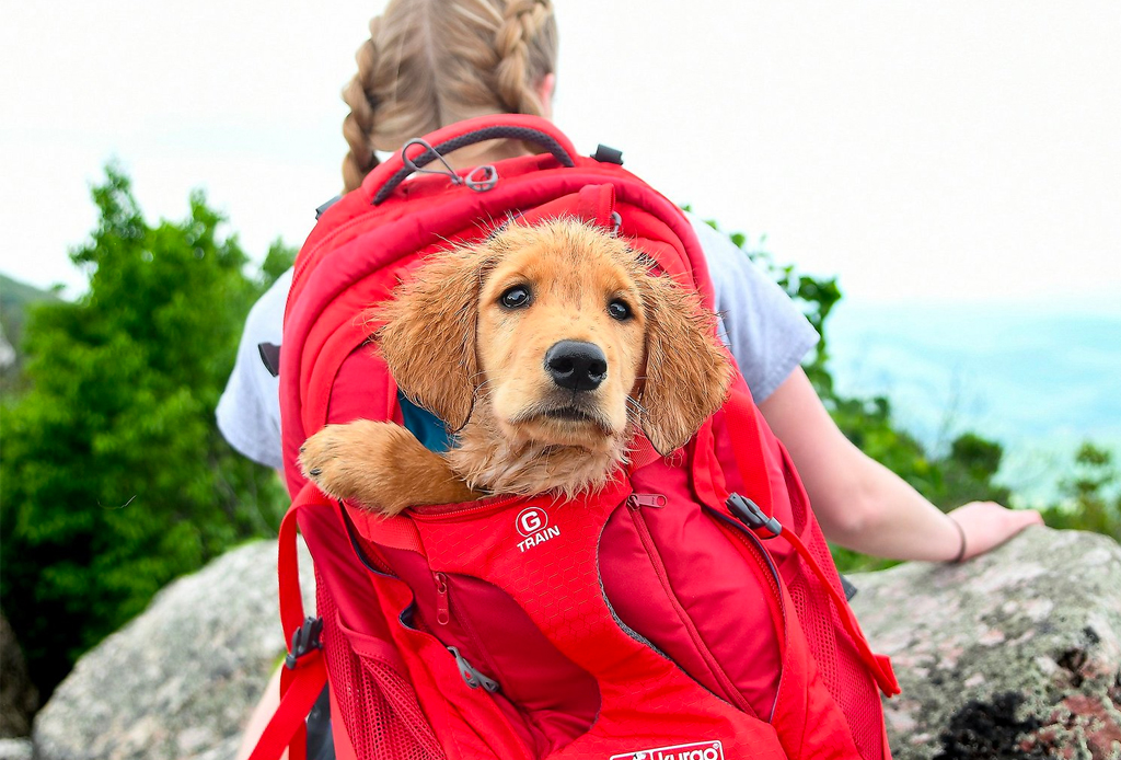 Best dog backpack carrier for hiking